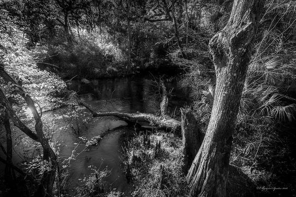 Cypress Knees Photograph - Light Flow by Marvin Spates