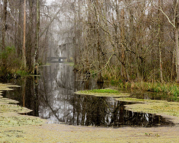 Photograph - Light Fog On The Swamp by Chris Coffee