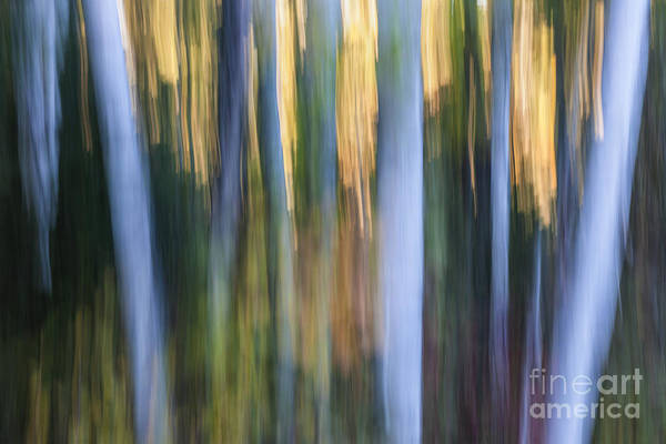 Wall Art - Photograph - Light In Evening Forest by Elena Elisseeva