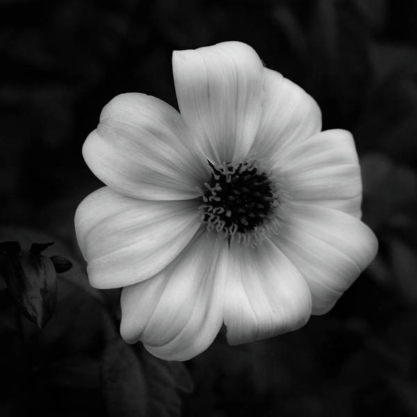 Photograph - Light In The Dark 4736 Bw_2 by Steven Ward