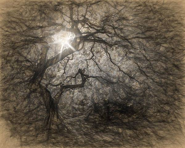Photograph - Light In The Darkness by Wes and Dotty Weber