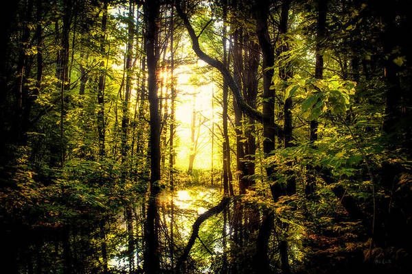 Photograph - Light In The Forest by Bob Orsillo