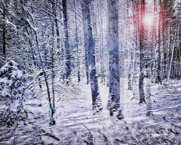 Digital Art - Light In The Forest by Edmund Nagele
