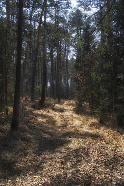 Photograph - Light In The Wood by Raffaella Lunelli