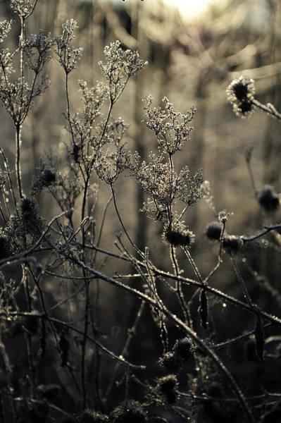 Photograph - Light Of Gold by Randi Grace Nilsberg