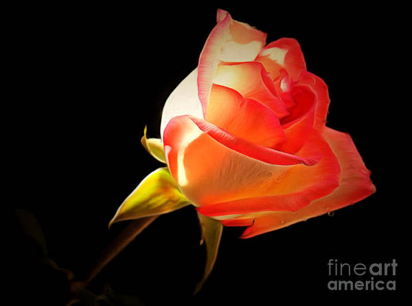 Rose Bud Photograph - Light Of Love by Krissy Katsimbras