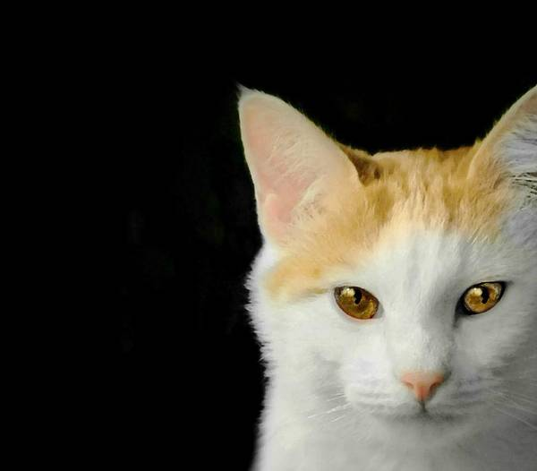 Orange Tabby Photograph - Light Of My Life by Diana Angstadt