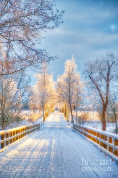 Birch Photograph - Light Of Winter by Veikko Suikkanen