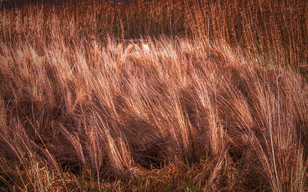Photograph - Light On Blowing Grass #g9 by Leif Sohlman