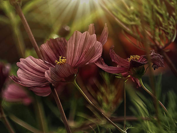 Photograph - Light On The Cosmos by Stephen Barrie