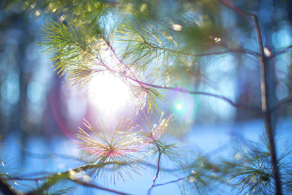 Photograph - Light Peering Through Trees by Brian Hale