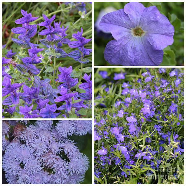 Photograph - Light Purple Flowers Collage by Carol Groenen