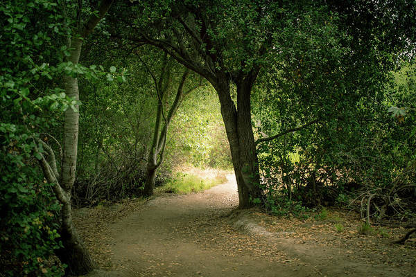 Photograph - Light Through The Tree Tunnel by Alison Frank