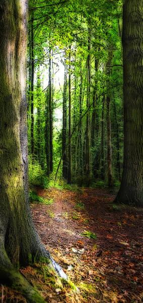 Wall Art - Photograph - Light Through The Trees by Meirion Matthias