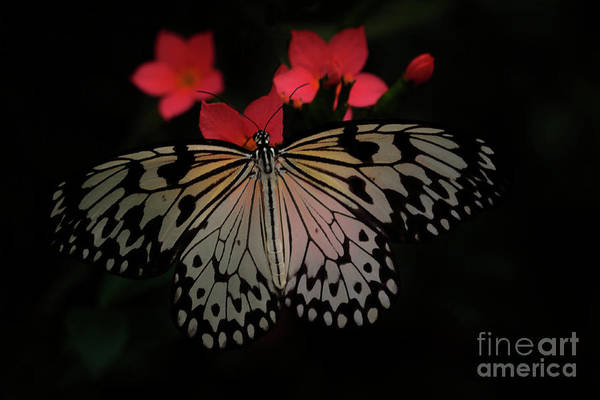Wall Art - Photograph - Light Through Rice Paper Butterfly Wings by Ruth Jolly