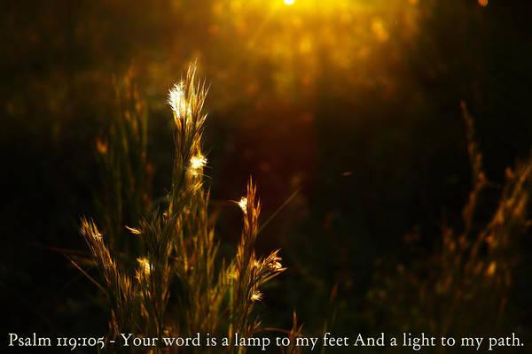 Light To My Path Art Print by Roberto Aloi