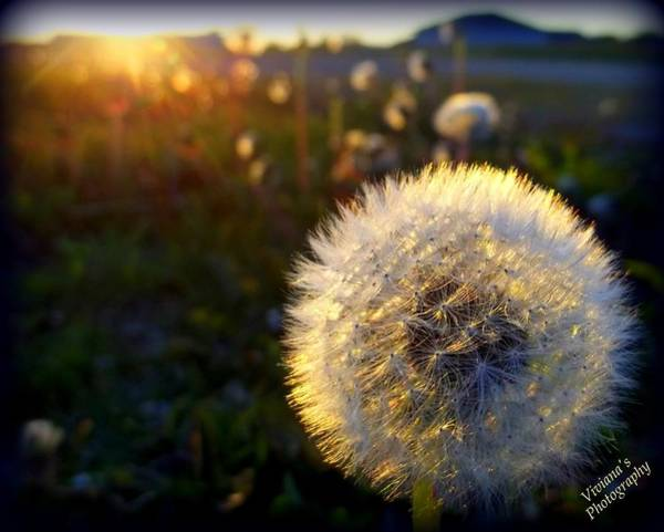 Photograph - Light Touches Us All  by Viviana  Nadowski