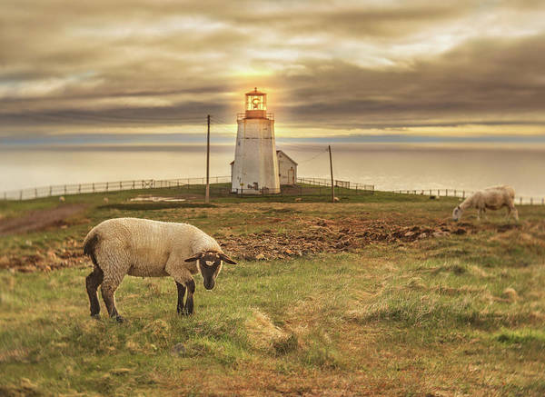 Photograph - Lighthouse At Cape St. Mary's by Tracy Munson