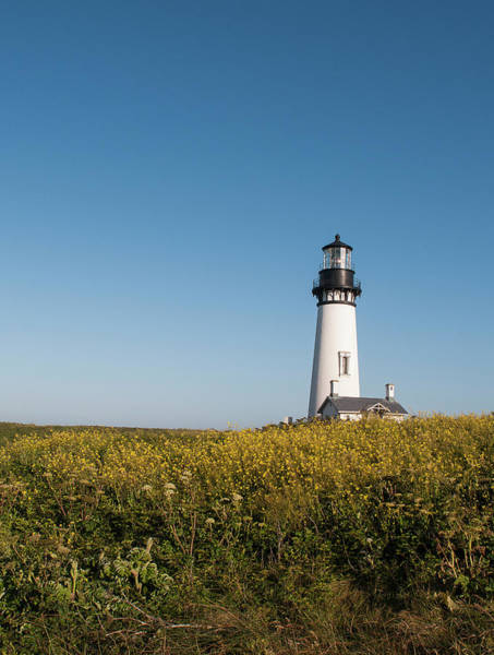 Photograph - Lighthouse At Yaquina Head With Mustard by Robert Potts