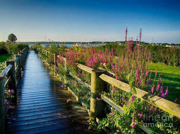Photograph - Lighthouse Path by Mark Miller