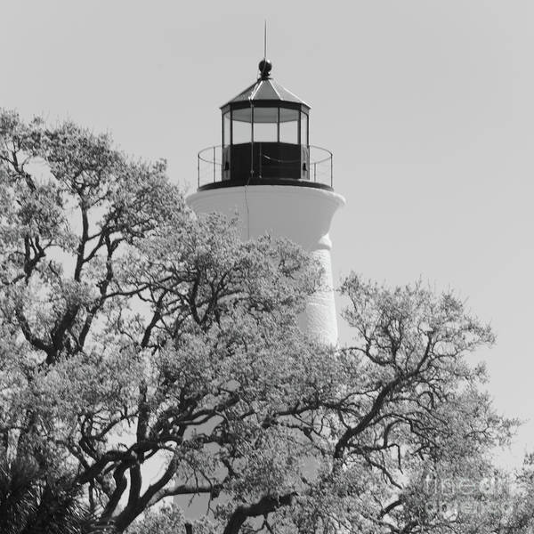 Photograph - Lighthouse With Oak Tree Branches Black And White by Carol Groenen