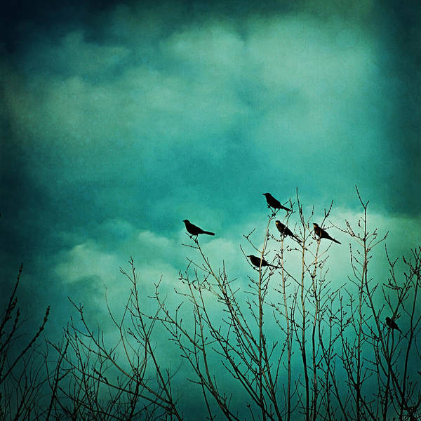 Photograph - Like Birds On Trees by Trish Mistric