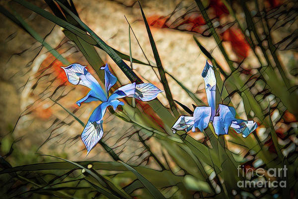 Photograph - Like Blue Birds Of Happiness by Jon Burch Photography