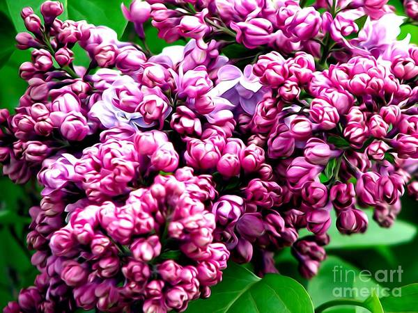 Photograph - Lilac Blossoms Abstract Soft Effect 1 by Rose Santuci-Sofranko