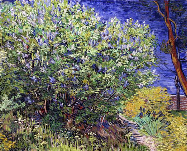 Painting - Lilac Bush by Vincent van Gogh
