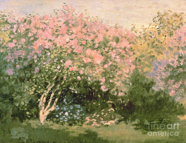 Painting - Lilac In The Sun by Celestial Images