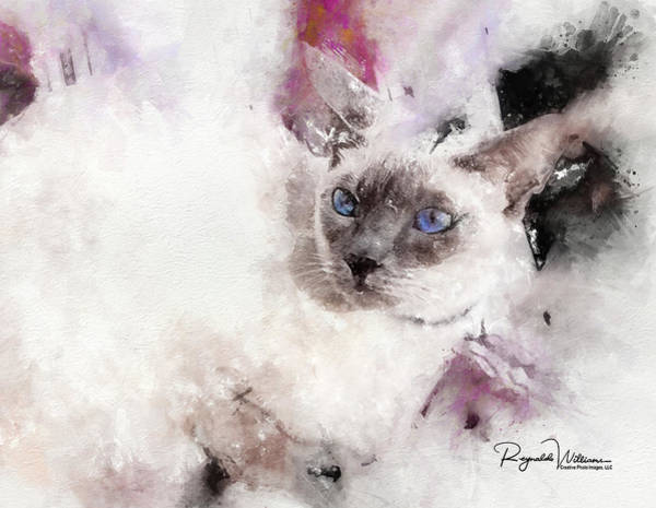 Photograph - Lilac Point Siamese Cat by Reynaldo Williams