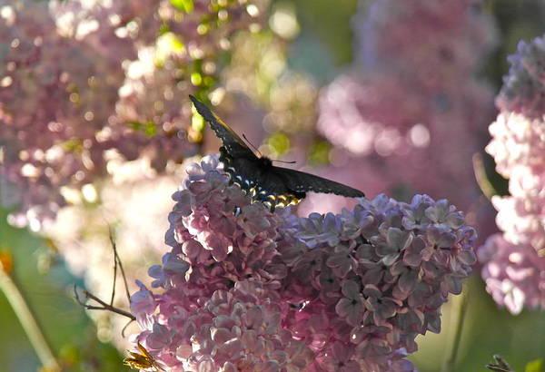 Lilac World Art Print