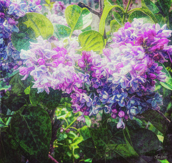 Photograph - Lilacs Expression by Anna Louise