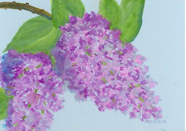 Coolidge Painting - Lilacs In Goache  by Roseann Meserve