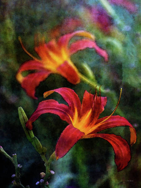 Photograph - Lilies 3928 Idp_2 by Steven Ward
