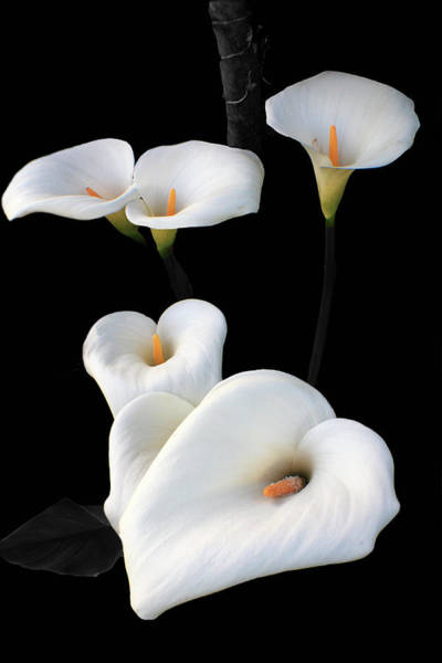 Photograph - Lilies by Aidan Moran