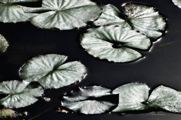 Wall Art - Photograph - Lilies Of The Deep by Donna Blackhall