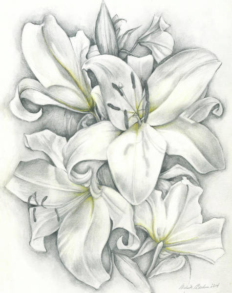Drawing - Lilies Pencil by Melinda Blackman