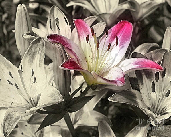 Photograph - Lilies by Smilin Eyes  Treasures