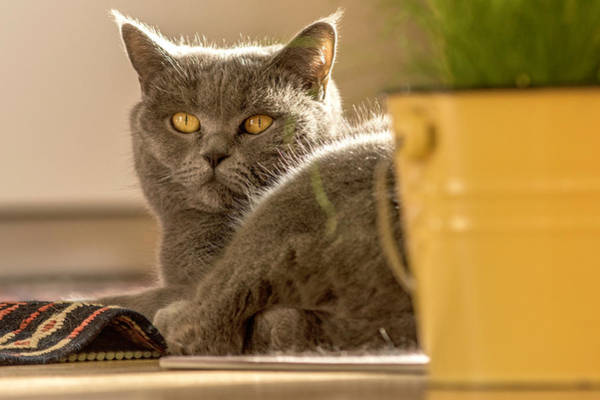Photograph - Lilli The Cat by Wolfgang Stocker