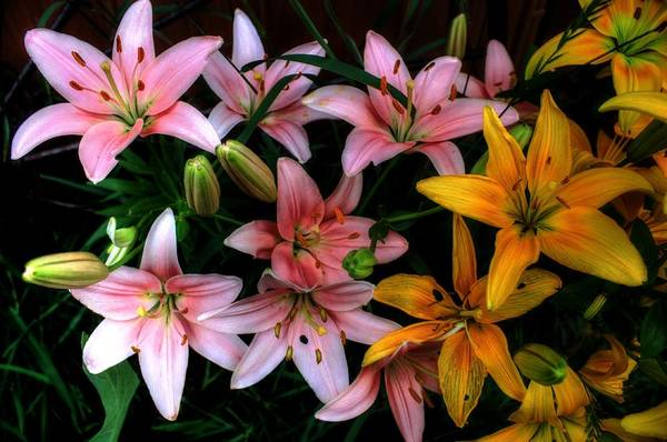 Photograph - Lilies by David Matthews