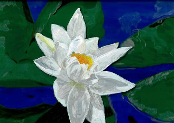 Lilly Pad Painting - Lilly Pond by Christa Chandler