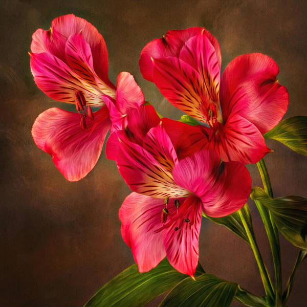 Photograph - Lilly With Brushstrokes by Mary Jo Allen