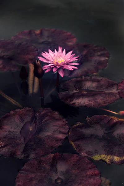 Photograph - Moonlight Lily by Jessica Jenney