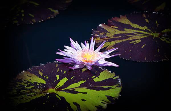 Photograph - Lily Artistry by Milena Ilieva