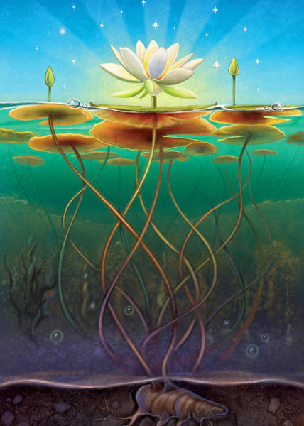 Mixed Media - Water Lily - Transmute by Anne Wertheim