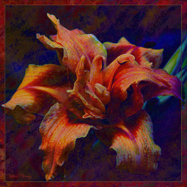 Digital Art - Lily by Barbara Berney
