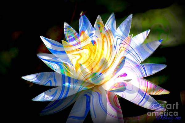 Photograph - Lily Blue by Donna Bentley