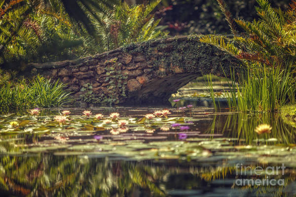 Photograph - Lily Bridge by Tim Wemple