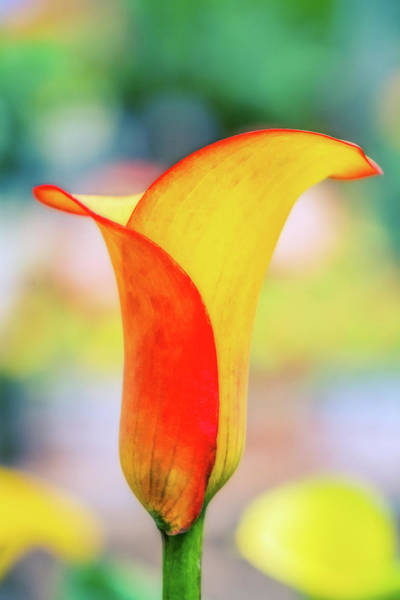 Wall Art - Digital Art - Lily  Bright And Light by Terry Davis